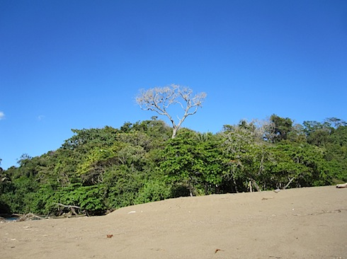 beach-trees-IMG_1684.JPG