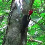 bird-IMG_0305.JPG