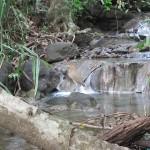 bird-near-falls-IMG_2924.JPG