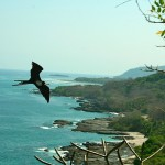 bird-over-coast-IMG_8093.JPG
