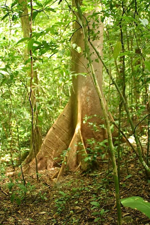 cabo-tree-10-IMG_7534.jpg