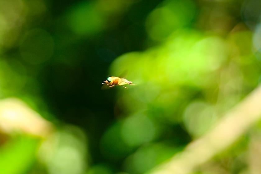 still-bug-IMG_7506.JPG