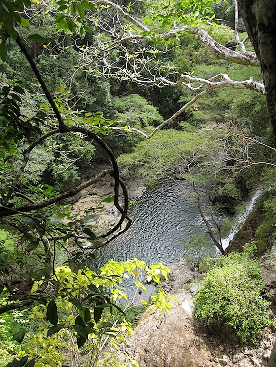 trees-looking-down-IMG_1506.jpg